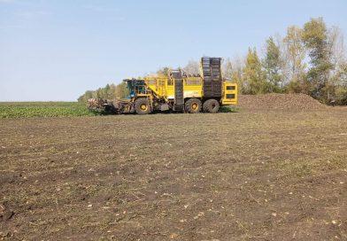 Курская область приступила к уборке сахарной свеклы и севу озимых культур