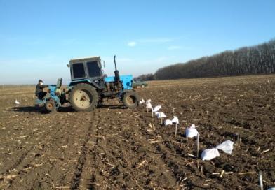 В Карачаево-Черкесии завершена закладка сортоопытов  озимых зерновых культур